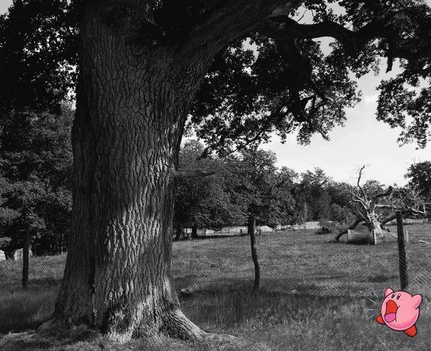Kirbys Dreamland Kirby tree Kassel Sababurg