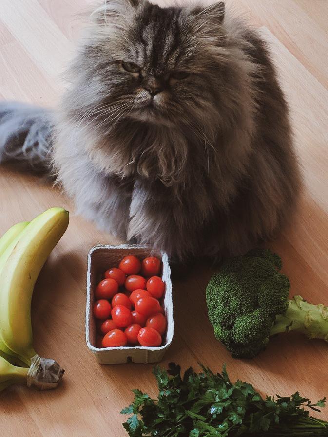 Vom ökologischen Pfotenabdruck und dem Mythos Zero Waste Katze